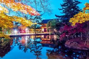 奈良ライトアップ