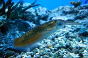 squid-006